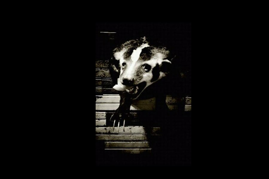 bar_badger