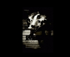 bar_badger